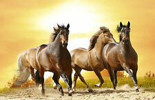 Framed Print of a Pack of Wild Horses Running on the Beach (Picture Poster Art)