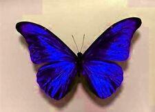 10 Brillantes Zafiro Azul Mariposas Boda Tocador Accesorios Para El Hogar