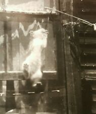 ANTIQUE VINTAGE FISHING SELF STICK CAT PAWS  VERNACULAR PHOTOGRAPHY FINE PHOTO