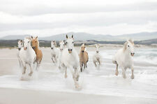 White horses Wall Mural photo Wallpaper for bedroom & living room 368x254cm