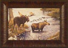 MOOSE by Gamini Ratnavira Bull Cow Water 11x15 FRAMED PRINT PICTURE