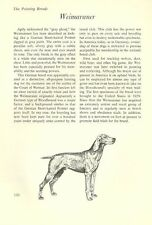 "The Weimaraner - Vintage Dog Art Print - Matted ""G"""