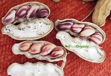 Jungle peanuts - the ONLY heirloom peanut seeds, the ONLY in Shells!