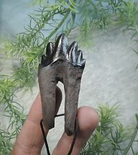 BABY ARCHEOCETE WHALE TOOTH REPLICA NECKLASE/MEGALODON FOSSIL SHARKS TOOTH TEETH
