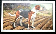 Foxhound   Original 1930's Vintage Illustrated Card  VGC