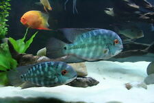 WHITE SAND CICHLID FISH TANK AQUARIUM  SUPER BRIGHT WHITE CRAFTS 8 LBs