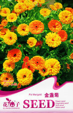 1 Pack 50 Pot Marigold Seeds Calendula Officinalis Garden Flowers A111
