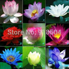 High Quality 20PCS 9 mix Lotus Flower Seeds Aquarium Seeds Lotus Plant Lotus