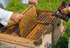 BEEKEEPING GUIDES & MANUALS COMPLETE BEE KEEPING E-BOOKS ON CD