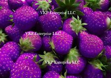 60+ Purple Strawberries Seed Non GMO Organically Grown in USA Free Shipping