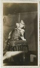 PHOTO ANCIENNE - VINTAGE SNAPSHOT - ANIMAL CHAT STUDIO LUMIÈRE - CAT PET LIGHT