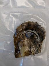 Five Individually Wrapped Akoya Oysters w SMALL 6-7mm Pearls Ships Week of 12/19