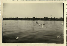 PHOTO ANCIENNE - VINTAGE SNAPSHOT - ANIMAL VOL OISEAU MOUETTE - BIRD SEAGULL