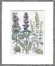 Sage Bugle Blue Purple Botanic Print Antique 1910 Edwardian Art Nouveau Mounted