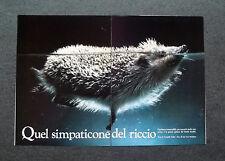 AL37 - Clipping-Ritaglio -1986- CONOSCIAMO GLI ANIMALI , IL RICCIO
