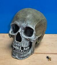 Life Like Human Skull Aquarium Ornament Decoration Fish Tank New