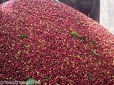 8 lb. Combo - ½ Sumatra Mandheling & ½ Colombia Supremo Raw Green Coffee Beans