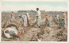 SC? * In the Land of King Cotton * Black Cotton Pickers in Field ca. 1908