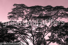 TREE SUNSET DIGITAL  IMAGE PHOTO WALLPAPER ART POSTER  FREE Email Delivery