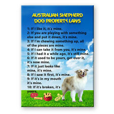 AUSTRALIAN SHEPHERD DOG Property Laws MAGNET Steel Case Funny