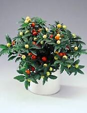 Seeds Madeira Winter, Jerusalem  Cherry (Solanum pseudocapsicum) Room Plant