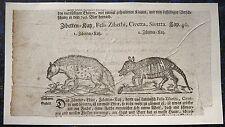 GÜRTELTIER + ZIBETKATZE. Orig. Holzschnitt von LONITZER 1557 (1700)