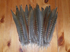 "30 COCK PHEASANT TAIL FEATHERS 9""to""10 FLY TYING ART& CRAFT FLORAL DISPLAY HATS"