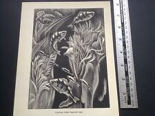 1950s madera grabado impresión acuario por Clifford Webb: peces, Pecera