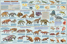Mammal Evolution Laminated Educational Science Teacher  Chart Print Poster 24x36