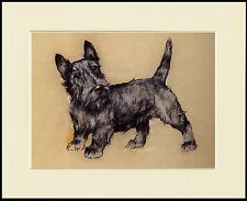 SCOTTISH TERRIER CUTE STANDING DOG LOVELY PRINT MOUNTED READY TO FRAME