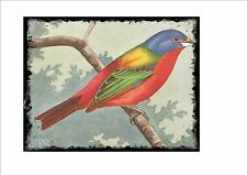 Nonpareil Bunting Vintage  Wall Plaque Cage Bird Picture Sluis Aviary Sign
