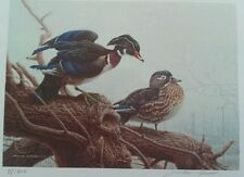 Print Wood Duck Canada First Competition Gold Edit 1990 Michael Dumas 3 HS