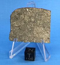 NWA 10166 Eucrite Achondrite from Vesta 11.17g Part Slice by Meteorite Men Steve
