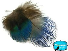 Peacock Feathers 100 Iridescent Blue Peacock Plumage Feathers