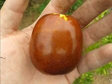 Rare seeds*Li Chinese Date Ziziphus jujube, 'Li' »Largest jujube fruits -4 seeds
