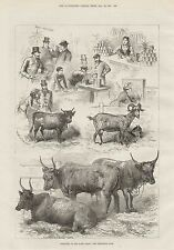 1881 DIARY SHOW SKETCHES CATTLE AGRICULTURAL HALL ISLINGTON