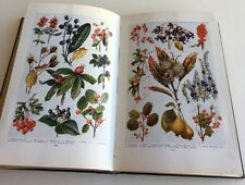 1930 Book of Knowledge Vol.XI Illustrated Encyclopedia Astronomy Wild Fruits Art
