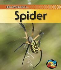 Spider (Life Cycle of a . . .)