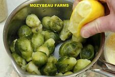 100-125 BRUSSEL SPROUT Seeds. Long Island Improved. Premium USA Seeds! Non-GMO.