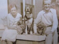 VINTAGE ANTIQUE AMERICAN PITBULL TERRIER PEKINGESE PADUCAH KY TAMPA FL PHOTOS