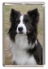 Border Collie Fridge Magnet Design No 12 by Starprint