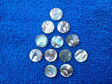 For Craft Shops 24 HIGH Quality HIGHLY Polished Rainbow Abalone Loose Stones New