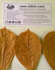 50 Premium Small Almond Catappa Leaves from INDIA, 100% Naturally Aged & Sun Dry