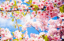 Framed Print - Japanese Pink Cherry Blossom Tree Under a Blue Sky (Picture Art)