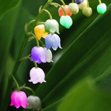 120 pcs import bell orchid seeds,Windbell orchids, rare precious flowers