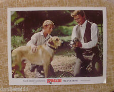 Disney, Rascal, Lobby Card, 1969, Walt Disney Productions, Technicolor