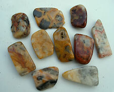 5 x YELLOW CRAZY LACE AGATE POLISHED 2.0cm - 2.6cm CRYSTAL TUMBLESTONES STONES