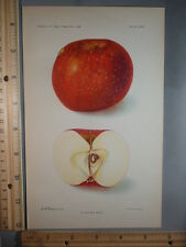 Rare Antique Original VTG Oliver Red Apple D G Passmore Color Litho Art Print
