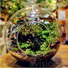 Flower Hanging Vase Glass Planter Plant Terrarium Container Home Wedding Decor