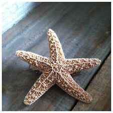 Sugar Starfish Barrette - Mermaid Star hair hairclip beach clip Ariel Accesories